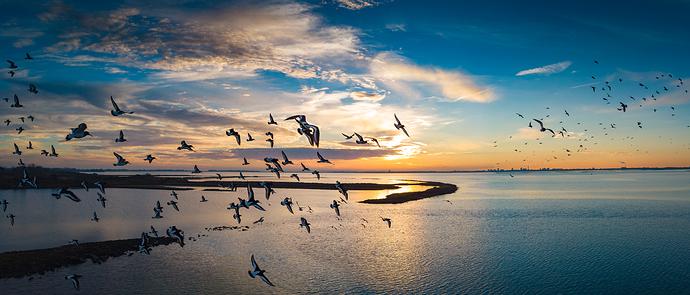 Hayling%20Island%20sunset%20birds
