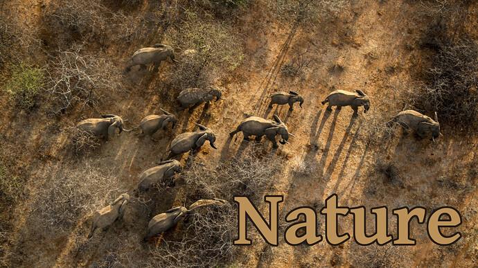 Elephant-Aerial_©-Ami-Vitale1-1260x708